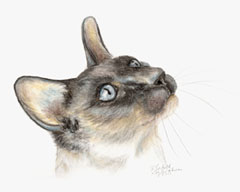 Siamese Cat in Tinted Charcoal