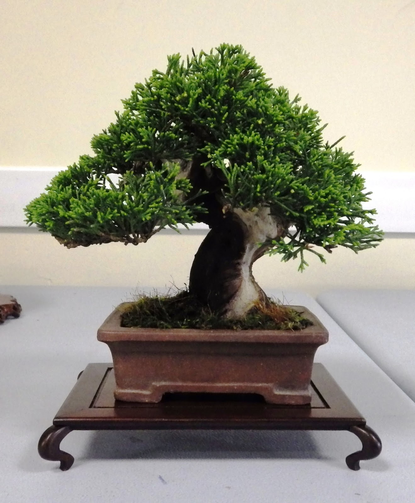 Bespoke Bonsai Stands May 2013