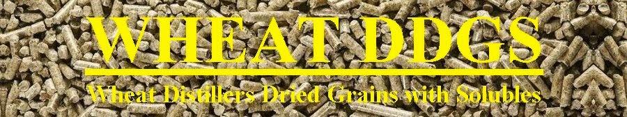 Wheat DDGS