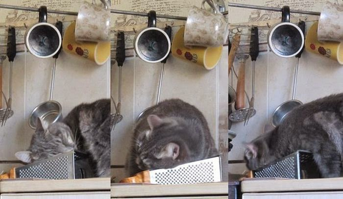 Funny cats - part 97 (40 pics + 10 gifs), cat pictures, cat loves grate