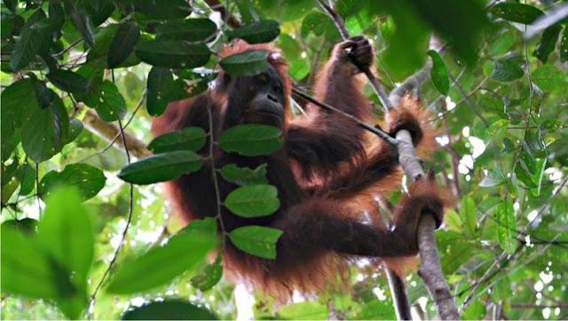 Palensi Kembali Menikmati Segarnya Hutan Tropis
