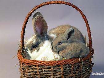 #15 Rabbit Wallpaper