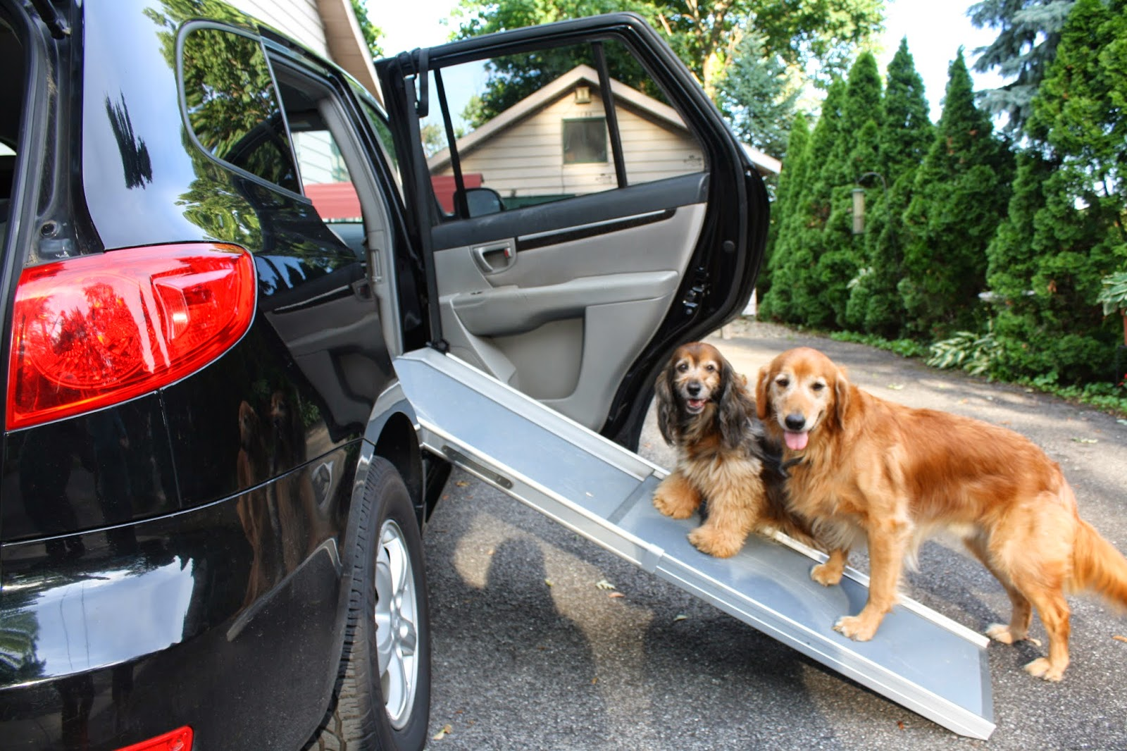 ... Dog Ramps For Car Side Doors Image Collections Doors Design Modern ...