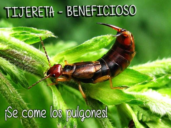 El rinc n del huerto insectos beneficiosos para el huerto for Plantas beneficiosas para el huerto