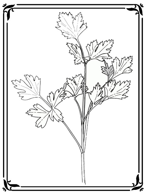 coloring pages of celery