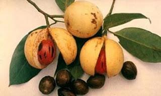http://mustahabbah.blogspot.com/2016/01/manfaat-buah-pala-bagi-kesehatan.html