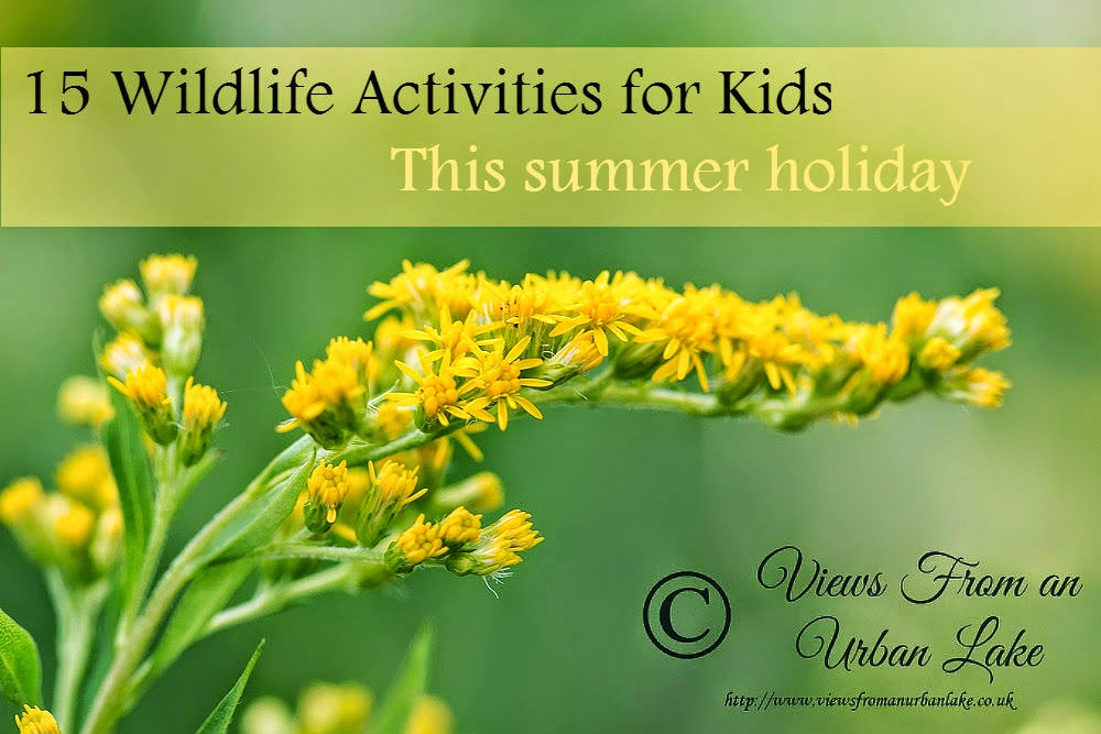 15 Wildlife Activities for kids this summer holiday