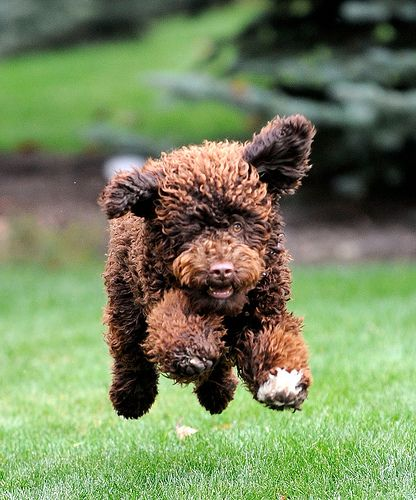 Top 10 Best Active Dog Breeds
