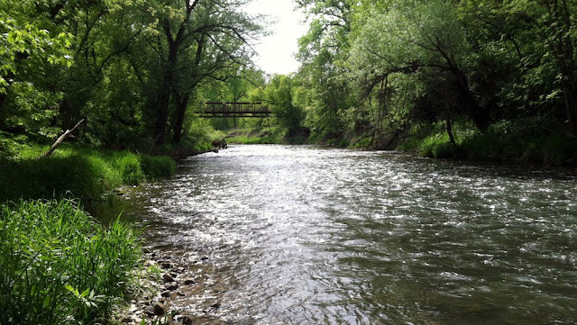 Looking downstream while trout fishing on the Root River in Southeast Minnesota.