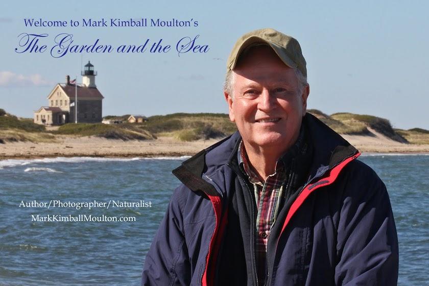 MarkKimballMoulton.com