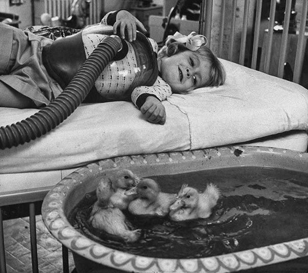 Животные используются как часть медицинской терапии, 1956 г.