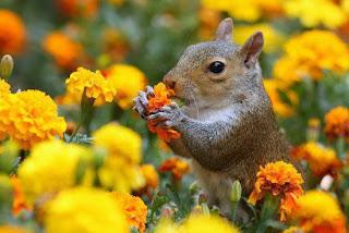 Ardillas entre flores