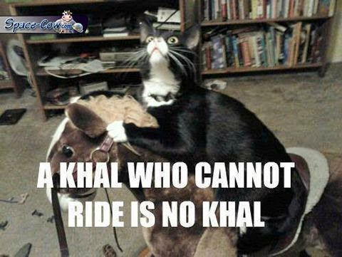 funny cat movie humor