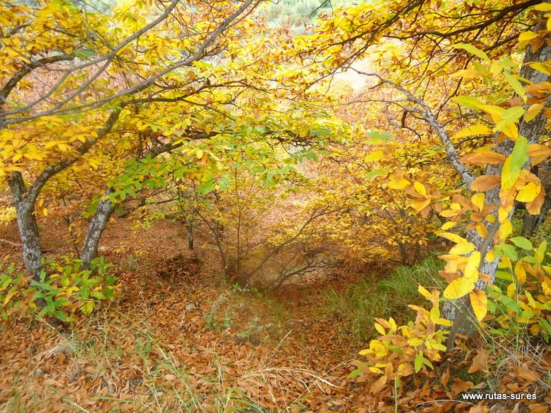 VALLE DEL GENAL: Bosques de Castaños, pueblos blancos y uno azul.