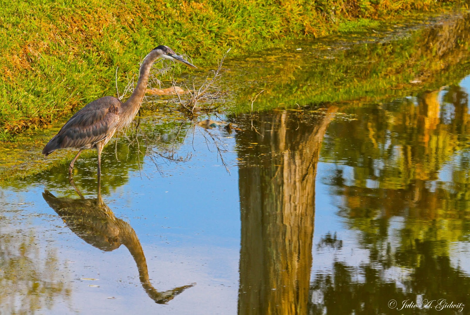 Birding Is Fun Reflections