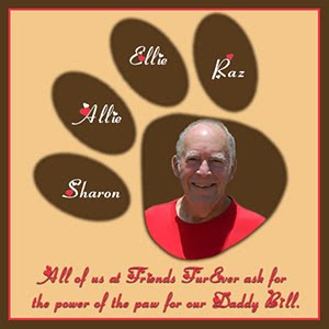 Purrs and Prayers for Bill.
