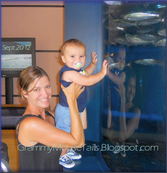 boy has fun watching the fishes at Birch aquarium at scripps photo image