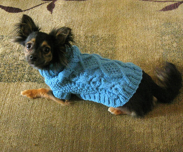 Knitting Pattern For Small Dog Clothes : Miss Julias Patterns: Free Patterns - Everything for Dogs - Coats & ...