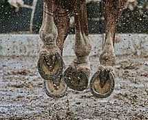 2014 July: In the Mud, On the Track, In the Race