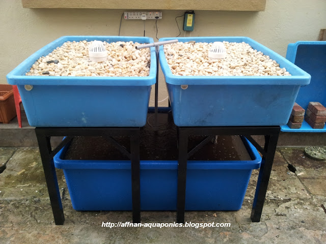Benta free aquaponic oysters for sale for Aquaponics fish tank for sale