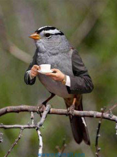 sparrow-drinking-tea-funny-cellphones-wallpaper