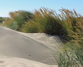 The Dunes along the North Jetty at Florence Oregon