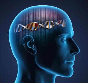 دراسة: شعور الإنسان بالشد العصبي مرتبط بالجينات  - رأس انسان جمجمة - human head skull
