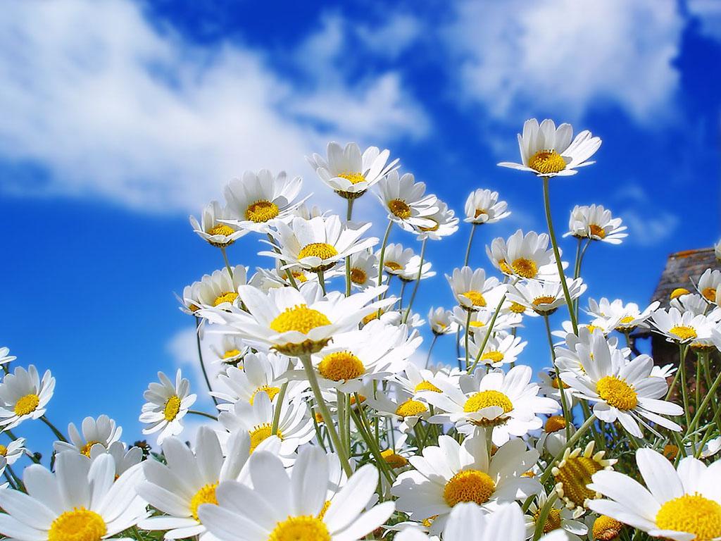 Wallpaper Bunga Bunga Cantik Terbaru