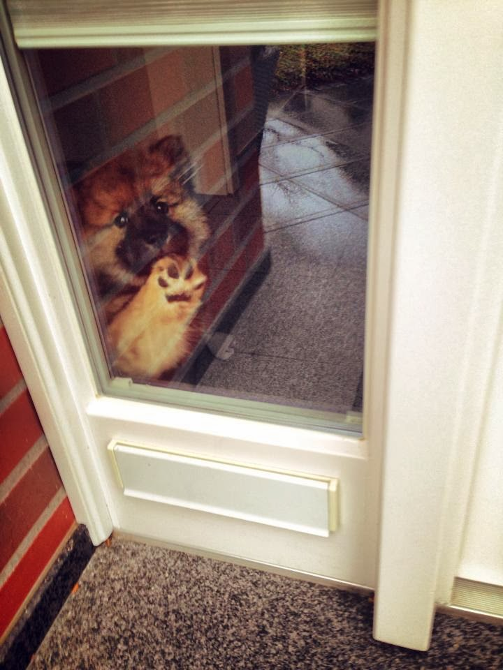 Cute dogs - part 9 (50 pics), puppy says goodbye to owner through window