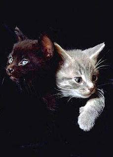 Фотография кошек