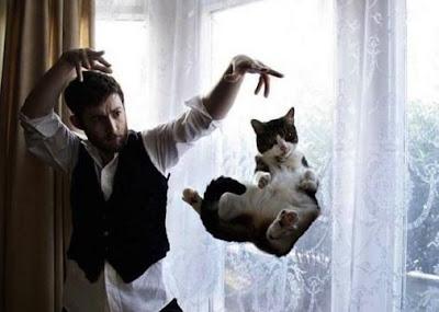 foto kejadian kucing lucu