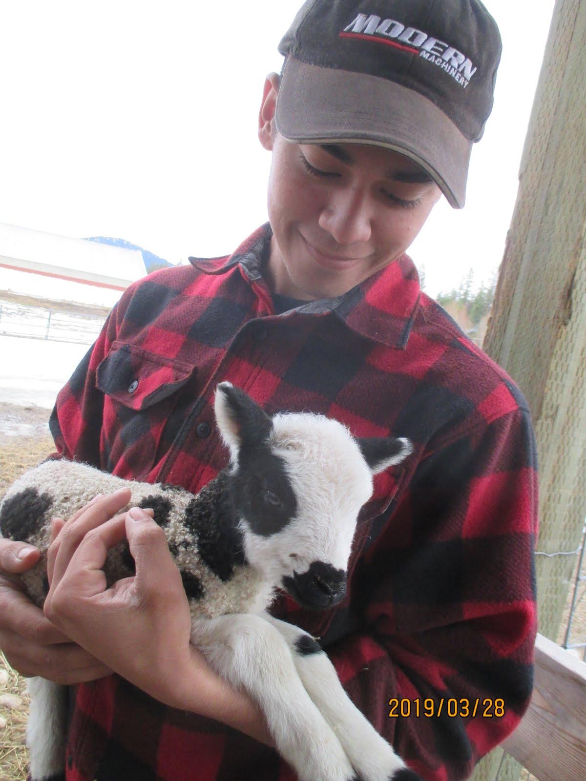 New Lambs !