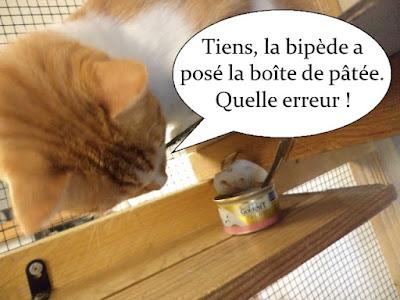 Chat roux et blanc trouve de la pâtée.