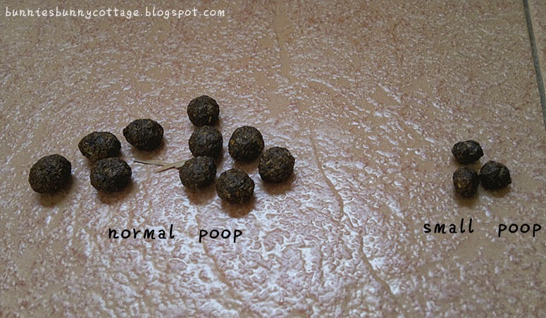 Dog Has No Appetite Small Poop