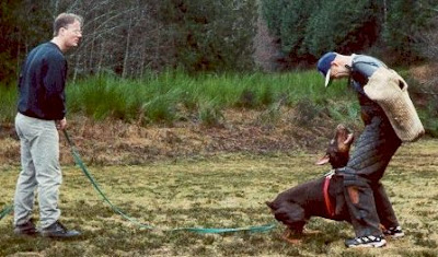 training-for-dogs-with-aggressive-behavior