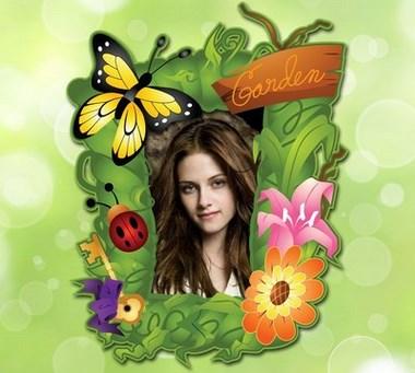 cuadro de fotos flores y mariposas