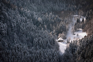 Hutan Black Forest, Jerman