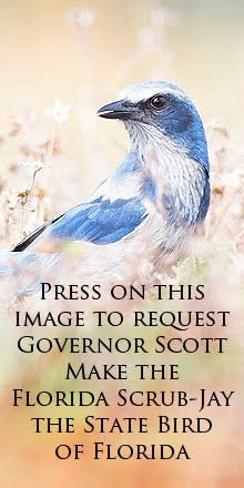 Email Governor Scott