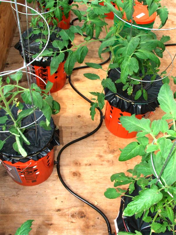 """All of the Grow Buckets are connected by a single gravity feed 1 2"""" flexible vinyl tube that is fed by a float valve regulator in the green bucket with the"""