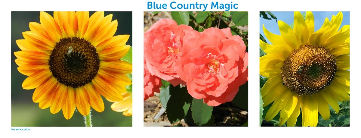 Blue Country Magic