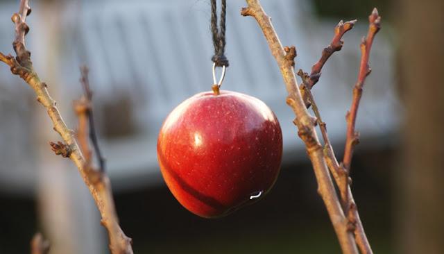 Pynt haven med røde æbler