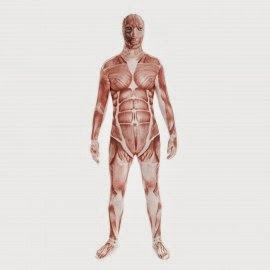 Muscle skinsuit - Body Worlds