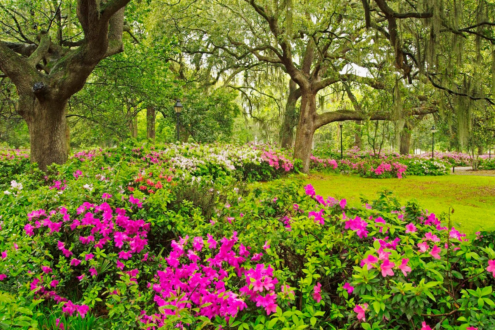 Beautiful Backyard Flower Gardens : Beautiful flower garden, flower forest cool wallpapers, wonderful