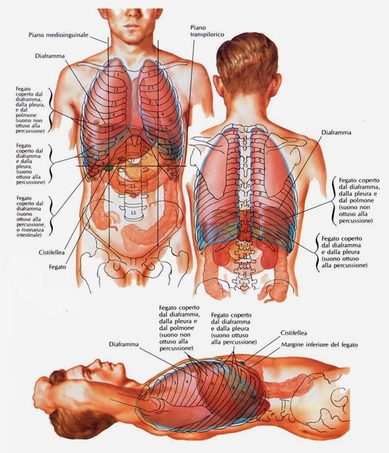 Esercizi per gambe a varicosity dopo operazione