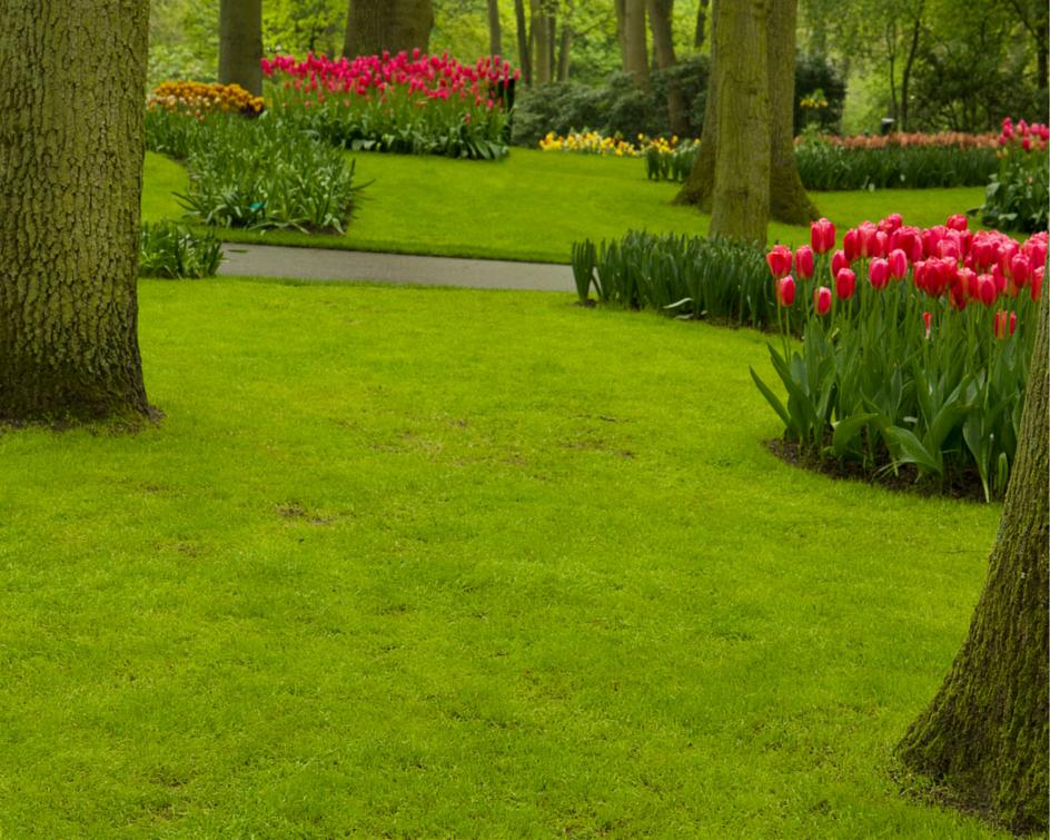 Nowoczesny ogórd: Jaka trawa na trawnik? – charakterystyka