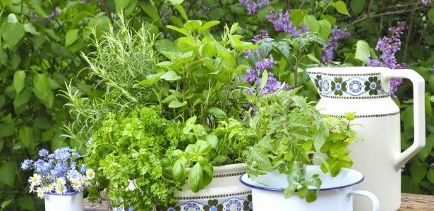 Jardins e vasos de ervas e temperos