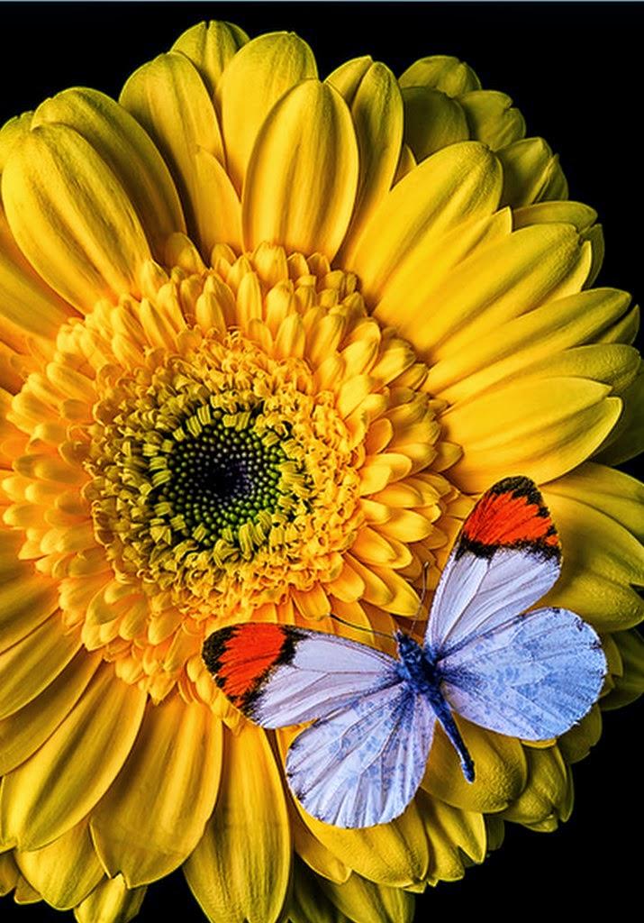 Cuadros pinturas oleos imagenes de flores con mariposas - Imagenes de mariposas de colores ...