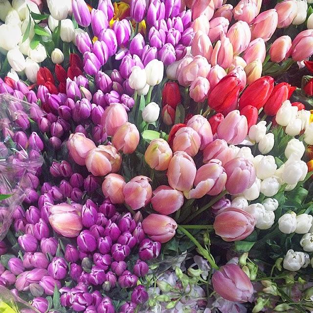 pastel tulips spring time toronto