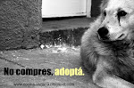 Adopta, no compres. Adopt, do not buy.