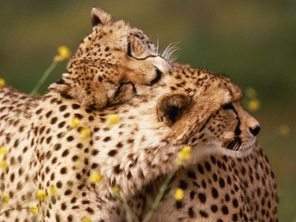 encyclopaedia of babies of beautiful wild animals best